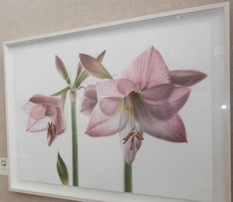 Amaryllis Blooms and Bud III