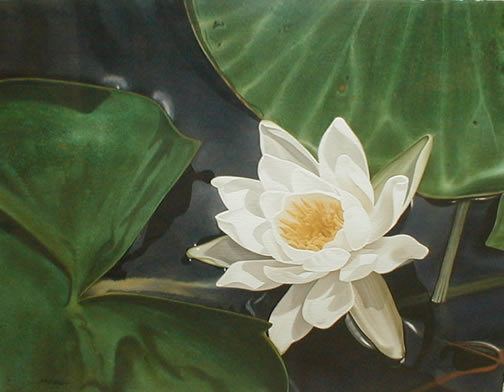 Lily                   Afloat