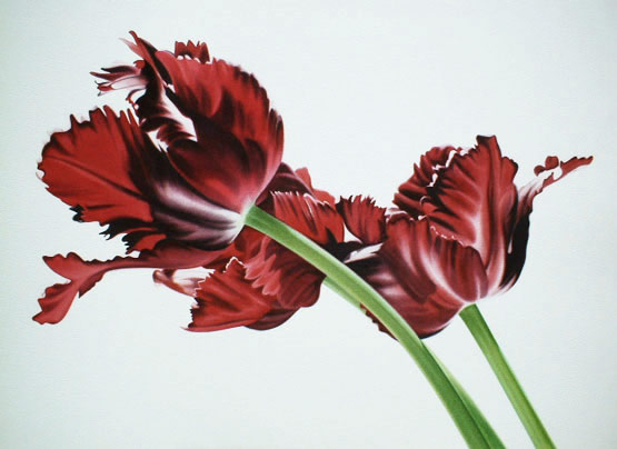 Three Parrot Tulips
