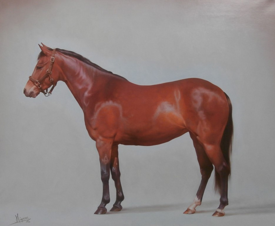 Brown Horse left facing